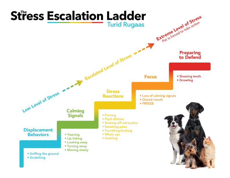 The Stress Ladder infographic